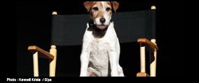 Uggie, le chien de The Artist