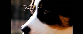 """parodie """"Bref"""" version chien"""