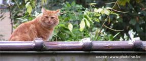 chat sur un muret