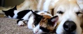photos d'un chien et de chatons en plein câlin