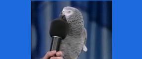 image billet perroquet