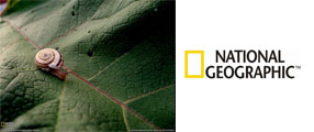 photo national geographic escargot