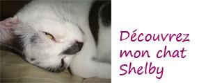 image de Shelby le chat de Valérie