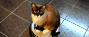 chat ménage