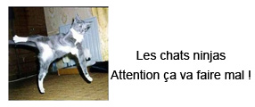image d'un chat ninja en action