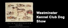 image westminster kennel dog show