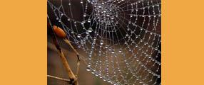 une-araignée