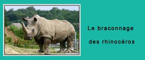 une rhinocéros copie