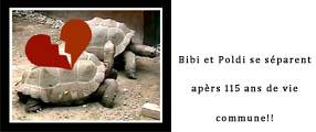 Une Bibi et Poldi copie
