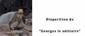 Une Georges le solitaire
