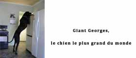 Une Giant Georges copie