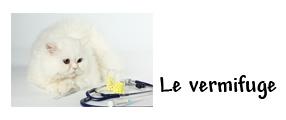 image d'un chat avec accessoires vétérinaires