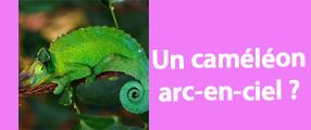 caméléon arc en ciel - Animaute