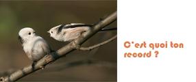 record oiseau