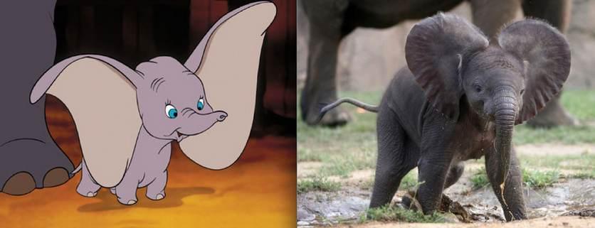 Dumbo l'éléphant - animaute