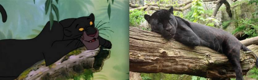 Baguerra la panthère dans le livre de la jungle - animaute