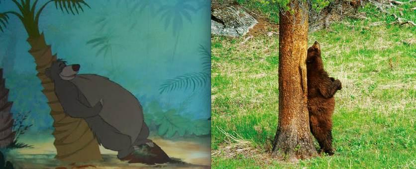 Balou l'ours dans le livre de la jungle - animaute