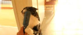 chat qui se brosse tout seul