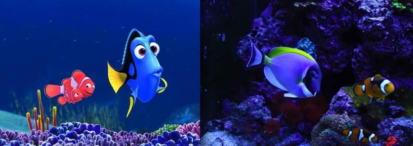 Nemo le poisson clown - animaute