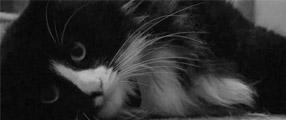 une henri le chat philosophe