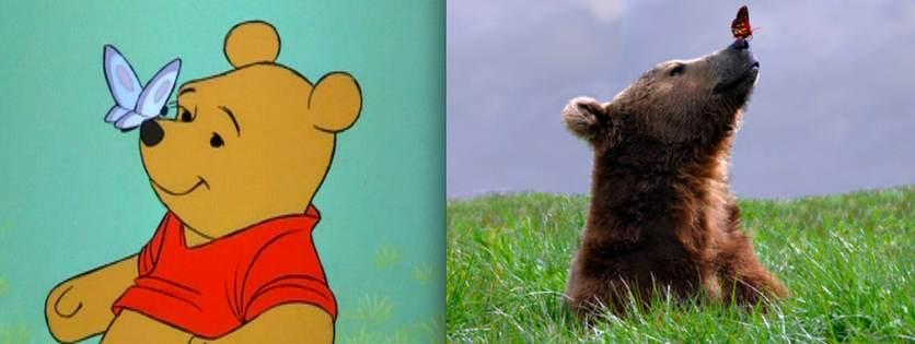 Winnie l'ourson - animaute
