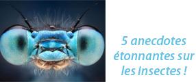 image de face d'une mouche - 5 anecdoctes sur les insectes