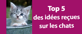top 5 des idées reçues sur les chats
