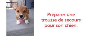 trousse de secours pour chien