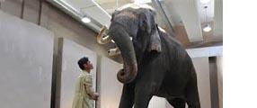 un elephant parle l'humain