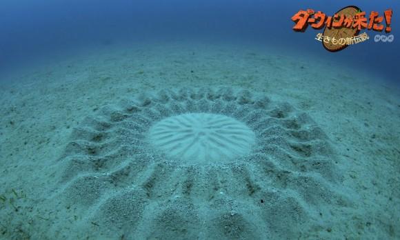 cercle fait par un poisson globe - animaute