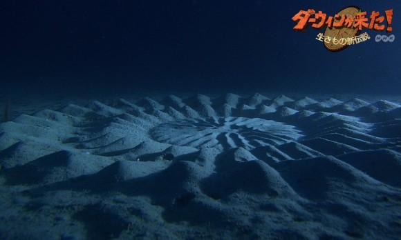 underwater-mystery-circle- animaute