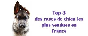 race de chien les + vendue