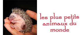 plus petits animaux