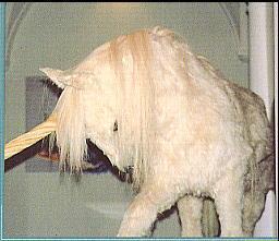 image d'une licorne - cryptozoologie