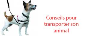 Conseils-transport-animal
