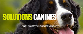 solutions-canine