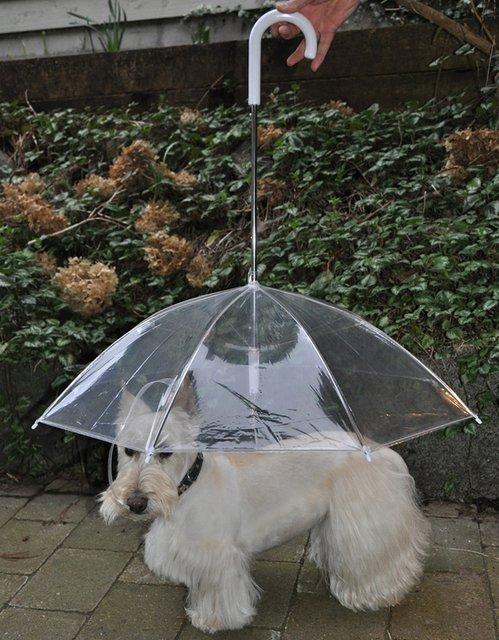 parapluie pour chien - blog Animaute