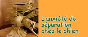 anxiete chez le chien