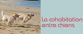 cohabitation chiens