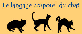 langage du chat