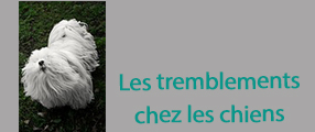 tremblements chiens