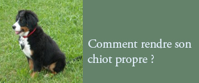 chiot propre