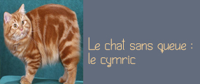 cymric