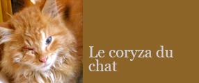coryza
