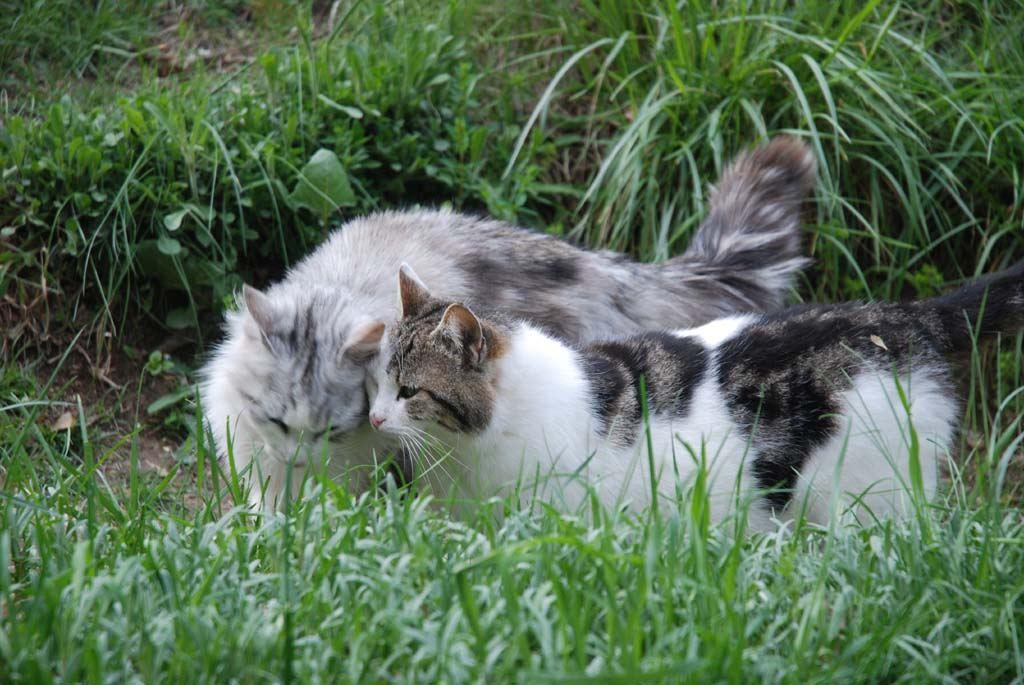 Résultats de recherche d'images pour «couple chat»