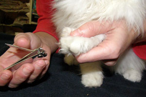 Couper les griffes d un chat infos pratiques chats - Comment couper les griffes d un chien ...