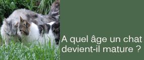 Le chat de goutti re infos pratiques chats - A quel age couper les griffes d un chat ...