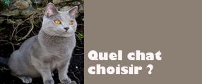 choix chat