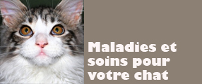 maladie soin