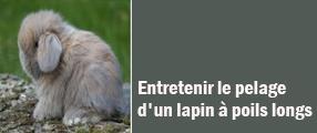 Entretenir le pelage d'un lapin à poils longs